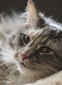居家萌宠小猫咪慵懒睡姿图片大全