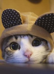 寵物小貓咪萌翻你系列 小貓咪也會賣萌啦