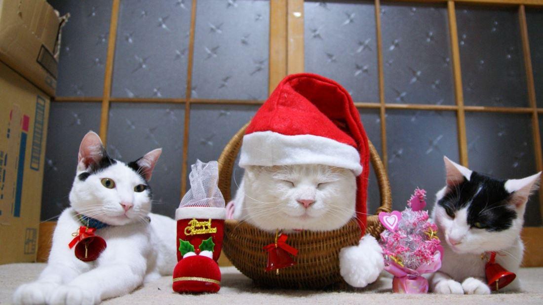 精选可爱萌宠小猫咪居家宠物图片壁纸