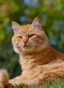高冷范萌宠图片 可爱橘猫图片壁纸大全