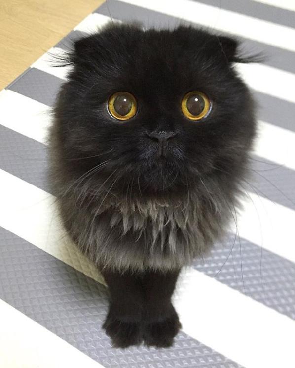 超会卖萌的家庭萌宠小猫咪图片 惹人疼爱想抱抱