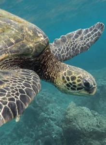 海洋野生动物海龟图片大全