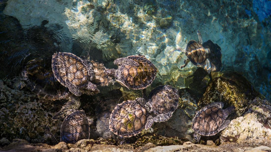 海洋野生動物海龜圖片大全