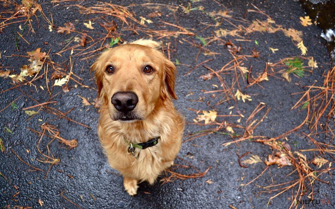 可爱的狗狗萌宠超高清图片大全